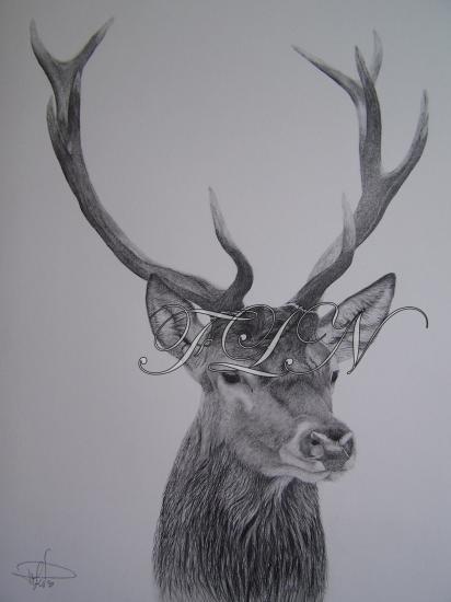 Mes dessins - Dessin tete de cerf ...