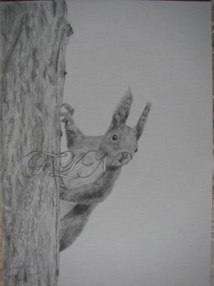 Ecureuil derrière son arbre (avril 2009)