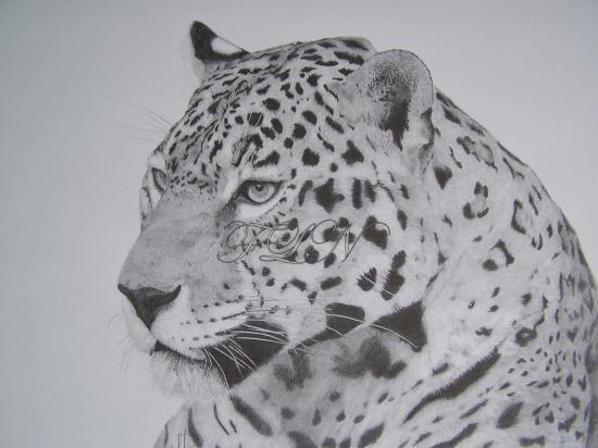 Jaguar (septembre 2009)