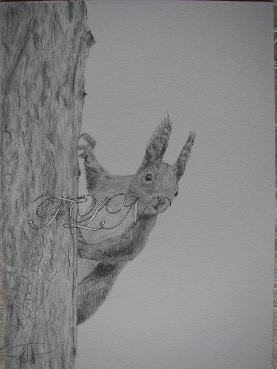 Ecureuil derrière son arbre