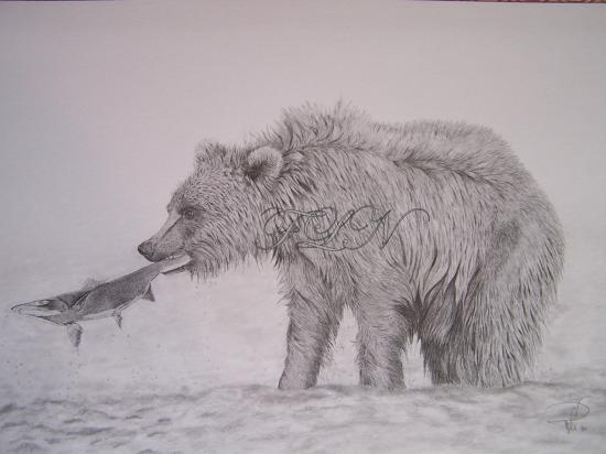 Jeune grizzli à la pêche