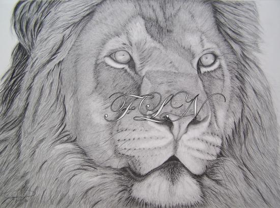 lion-jan-2010.jpg
